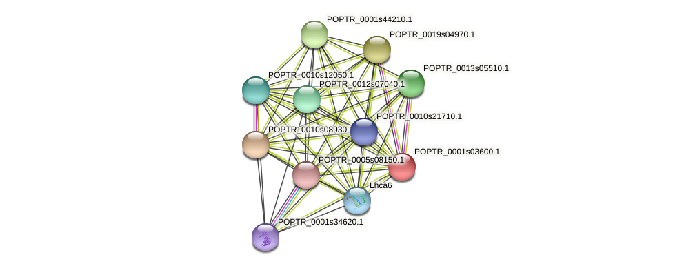 POPTR_0001s03600.1 protein (Populus trichocarpa) - STRING interaction network