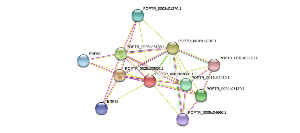 POPTR_0001s03680.1 protein (Populus trichocarpa) - STRING interaction network