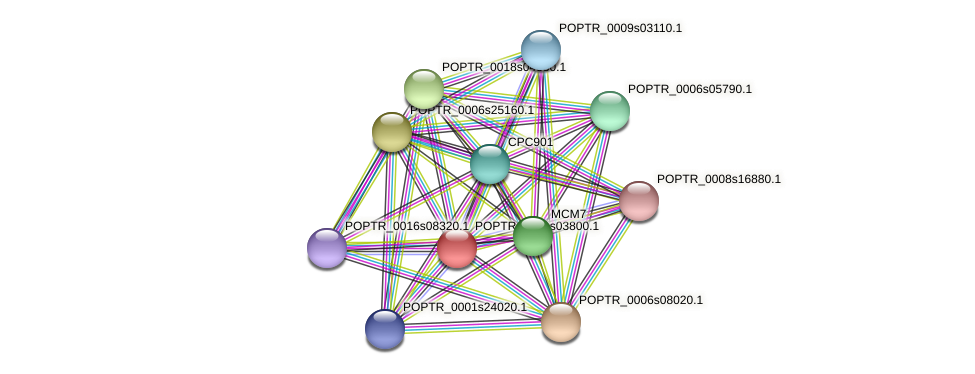 POPTR_0001s03800.1 protein (Populus trichocarpa) - STRING interaction network