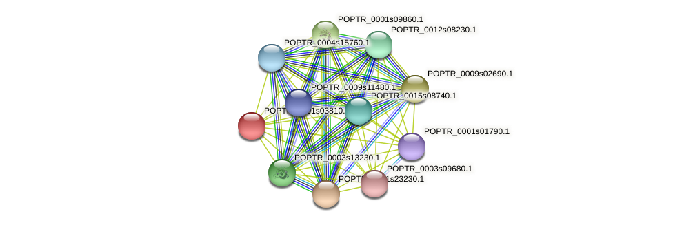 POPTR_0001s03810.1 protein (Populus trichocarpa) - STRING interaction network
