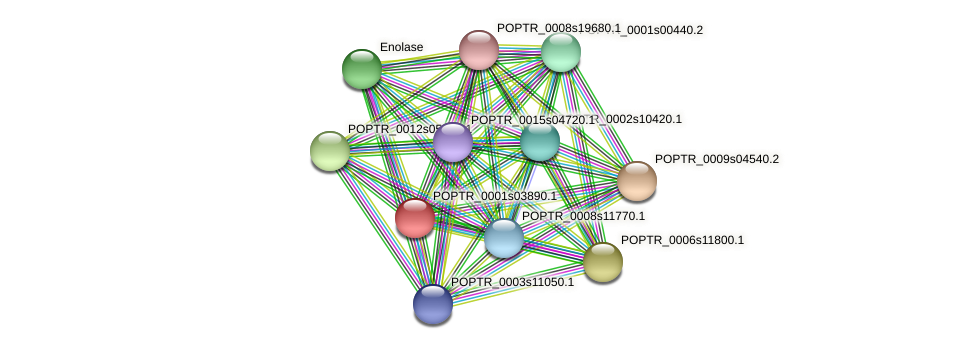 POPTR_0001s03890.1 protein (Populus trichocarpa) - STRING interaction network