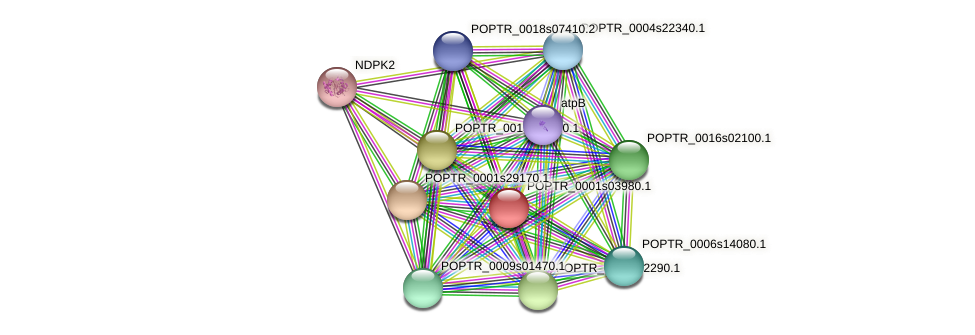 POPTR_0001s03980.1 protein (Populus trichocarpa) - STRING interaction network