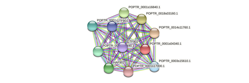 POPTR_0001s04340.1 protein (Populus trichocarpa) - STRING interaction network