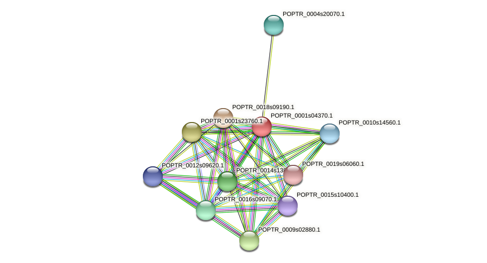 POPTR_0001s04370.1 protein (Populus trichocarpa) - STRING interaction network