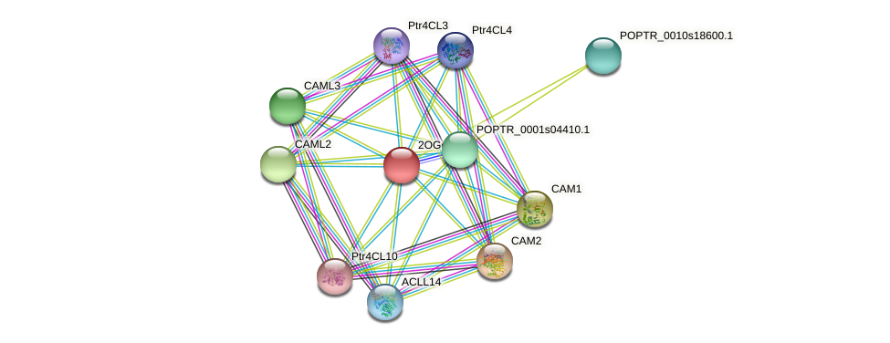POPTR_0001s04430.1 protein (Populus trichocarpa) - STRING interaction network