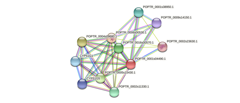 POPTR_0001s04490.1 protein (Populus trichocarpa) - STRING interaction network