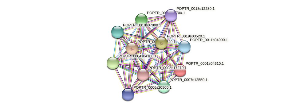 POPTR_0001s04610.1 protein (Populus trichocarpa) - STRING interaction network