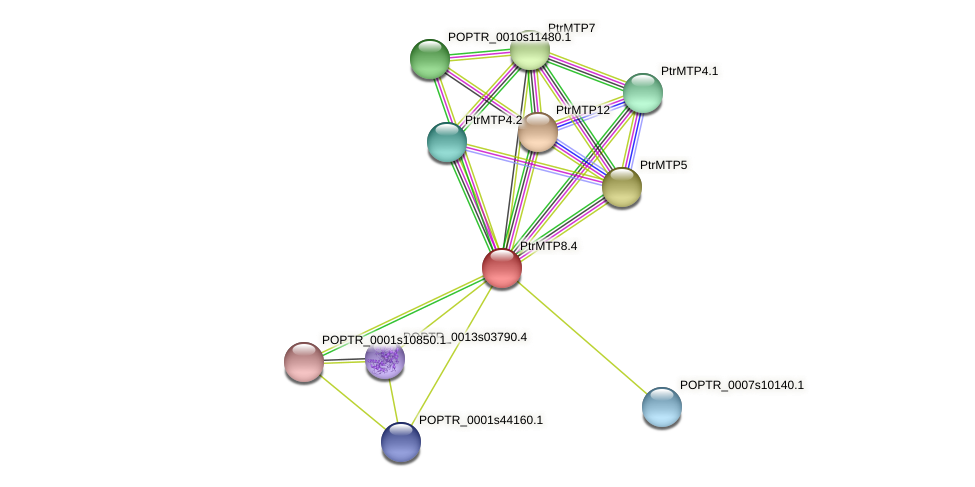 POPTR_0001s04740.1 protein (Populus trichocarpa) - STRING interaction network