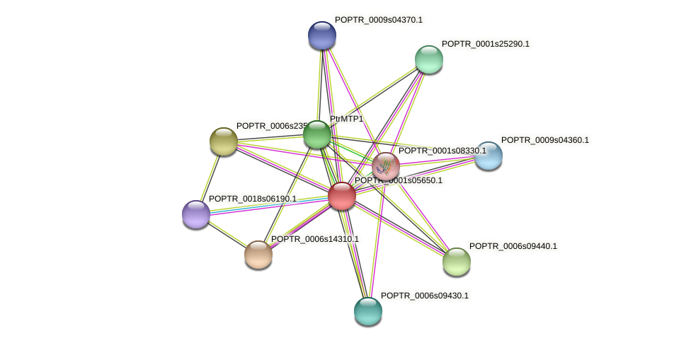 POPTR_0001s05650.1 protein (Populus trichocarpa) - STRING interaction network