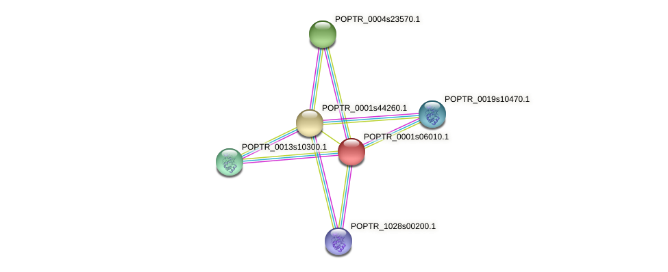 POPTR_0001s06010.1 protein (Populus trichocarpa) - STRING interaction network