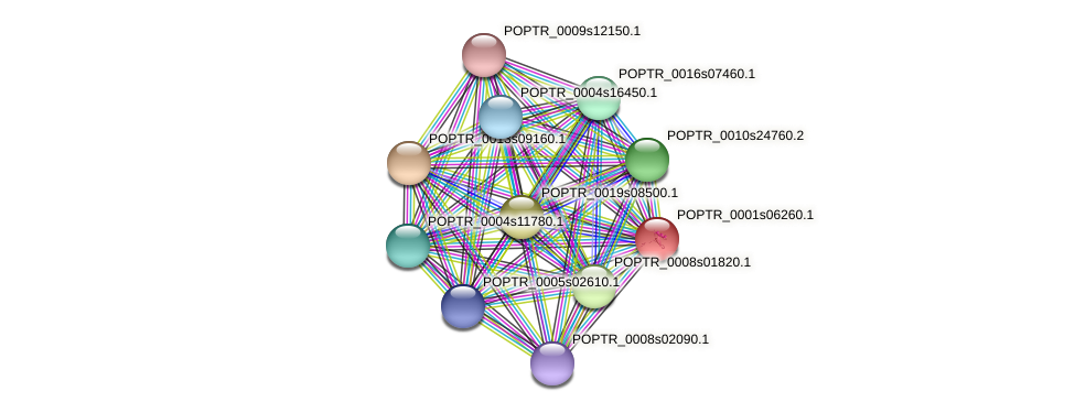 POPTR_0001s06260.1 protein (Populus trichocarpa) - STRING interaction network
