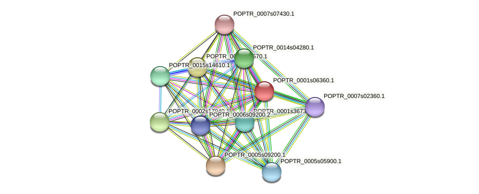 POPTR_0001s06360.1 protein (Populus trichocarpa) - STRING interaction network