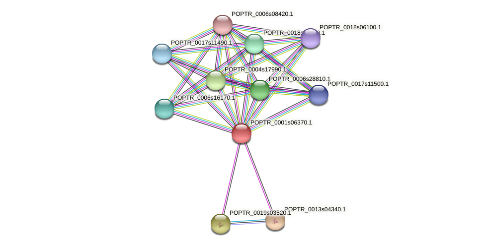 POPTR_0001s06370.1 protein (Populus trichocarpa) - STRING interaction network
