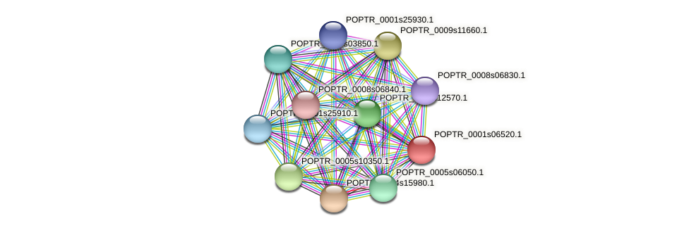 POPTR_0001s06520.1 protein (Populus trichocarpa) - STRING interaction network