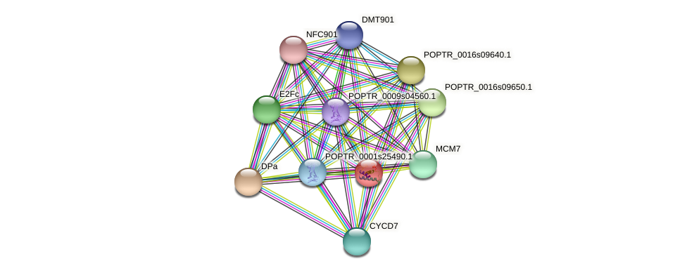 RBL901 protein (Populus trichocarpa) - STRING interaction network