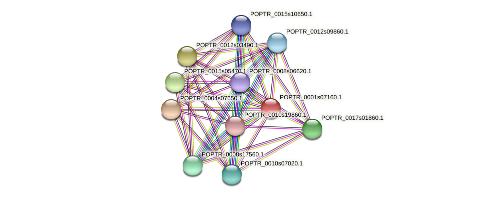 POPTR_0001s07160.1 protein (Populus trichocarpa) - STRING interaction network