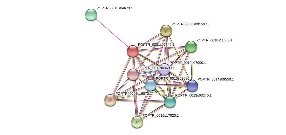 POPTR_0001s07340.1 protein (Populus trichocarpa) - STRING interaction network