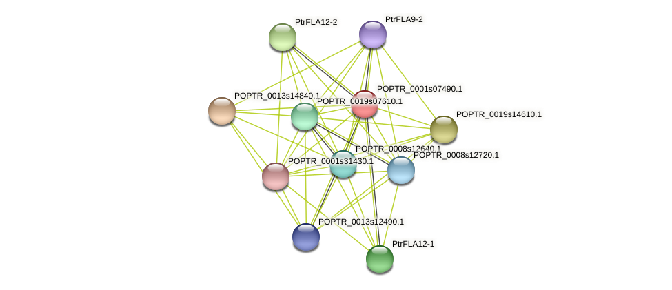 POPTR_0001s07490.1 protein (Populus trichocarpa) - STRING interaction network