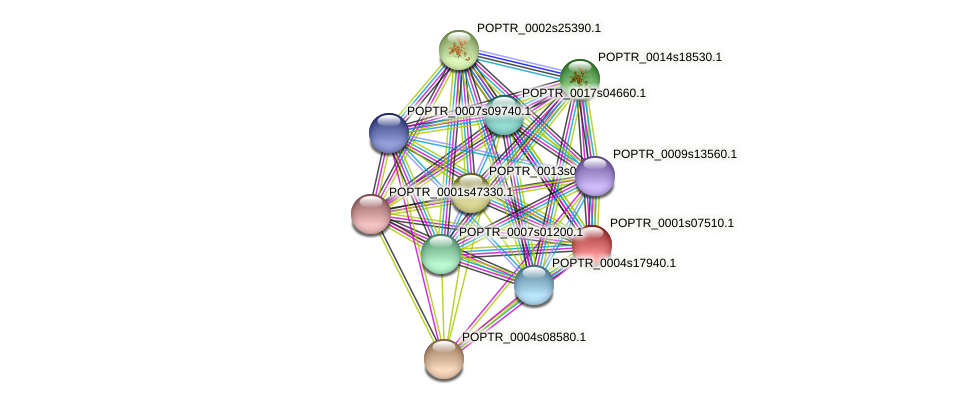 POPTR_0001s07510.1 protein (Populus trichocarpa) - STRING interaction network