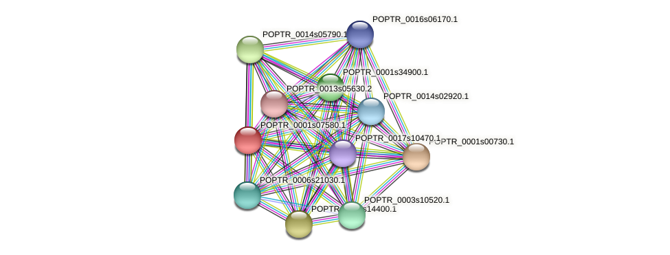 POPTR_0001s07580.1 protein (Populus trichocarpa) - STRING interaction network
