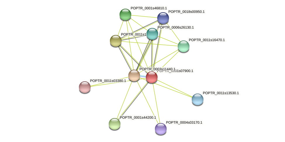 POPTR_0001s07900.1 protein (Populus trichocarpa) - STRING interaction network