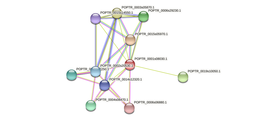 POPTR_0001s08030.1 protein (Populus trichocarpa) - STRING interaction network