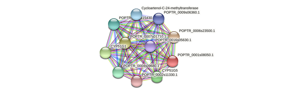 POPTR_0001s08050.1 protein (Populus trichocarpa) - STRING interaction network