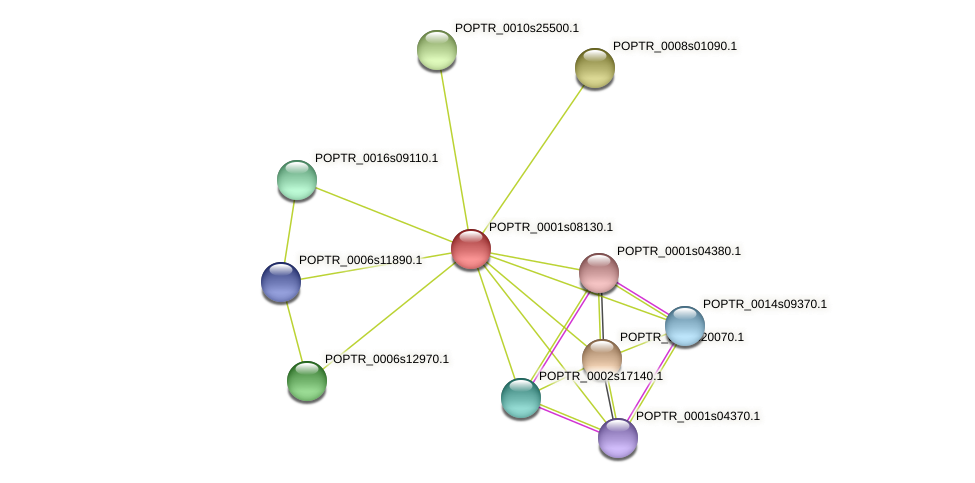 POPTR_0001s08130.1 protein (Populus trichocarpa) - STRING interaction network