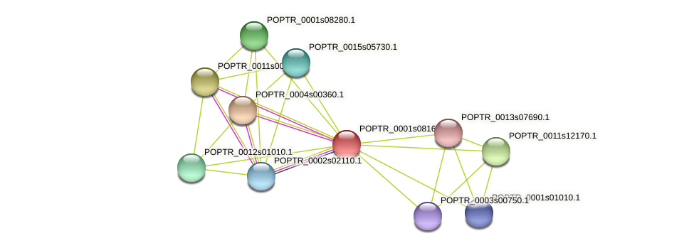 POPTR_0001s08160.1 protein (Populus trichocarpa) - STRING interaction network