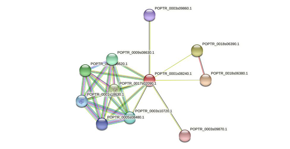 POPTR_0001s08240.1 protein (Populus trichocarpa) - STRING interaction network