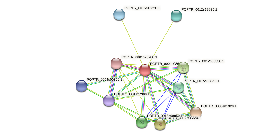 POPTR_0001s08610.1 protein (Populus trichocarpa) - STRING interaction network
