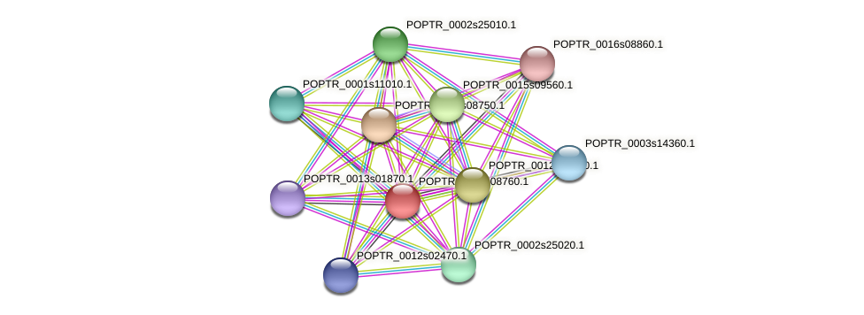POPTR_0001s08760.1 protein (Populus trichocarpa) - STRING interaction network