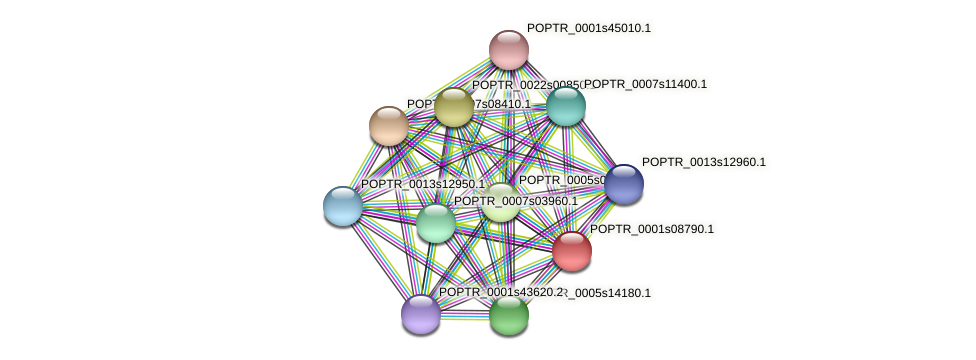 POPTR_0001s08790.1 protein (Populus trichocarpa) - STRING interaction network