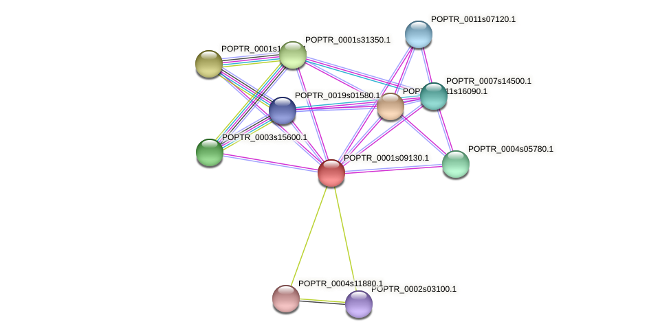 POPTR_0001s09130.1 protein (Populus trichocarpa) - STRING interaction network