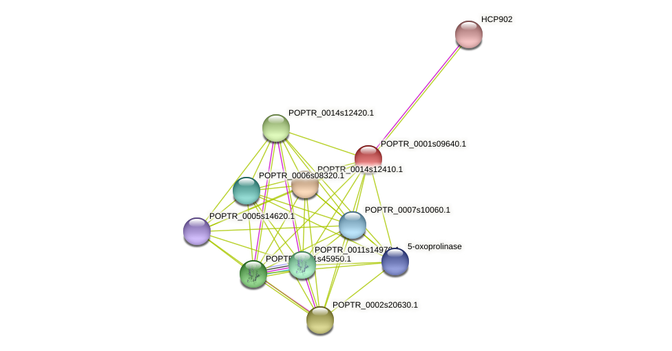 POPTR_0001s09640.1 protein (Populus trichocarpa) - STRING interaction network