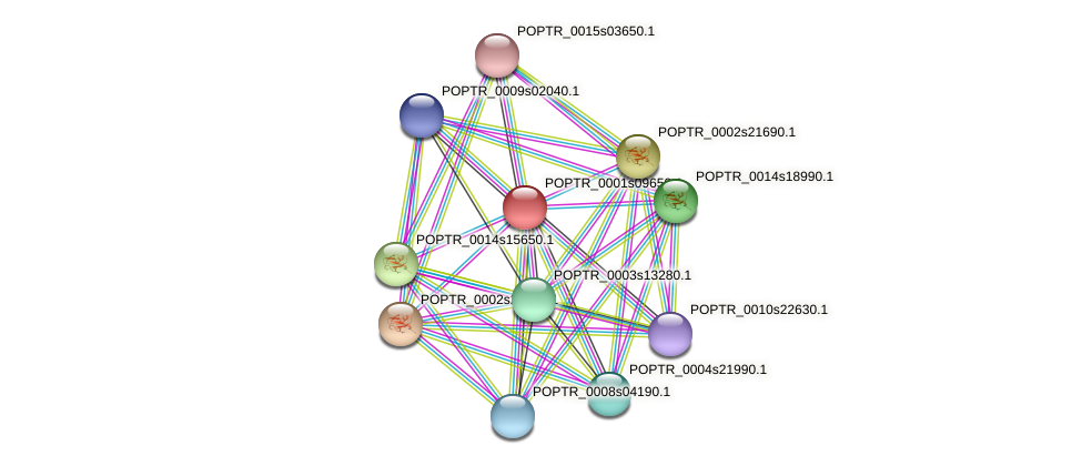 POPTR_0001s09650.1 protein (Populus trichocarpa) - STRING interaction network