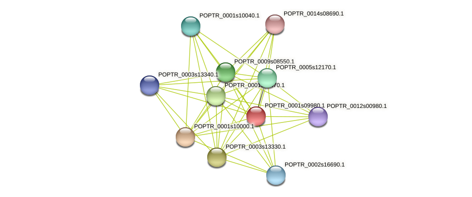 POPTR_0001s09980.1 protein (Populus trichocarpa) - STRING interaction network