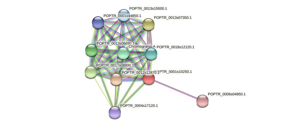 POPTR_0001s10250.1 protein (Populus trichocarpa) - STRING interaction network
