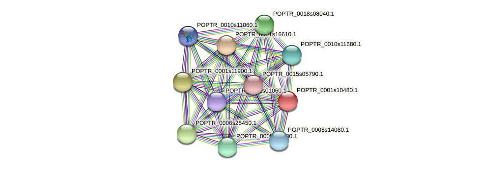 POPTR_0001s10480.1 protein (Populus trichocarpa) - STRING interaction network