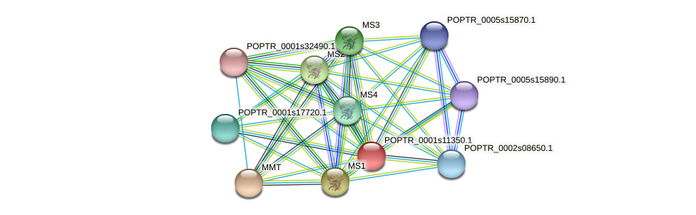 POPTR_0001s11350.1 protein (Populus trichocarpa) - STRING interaction network