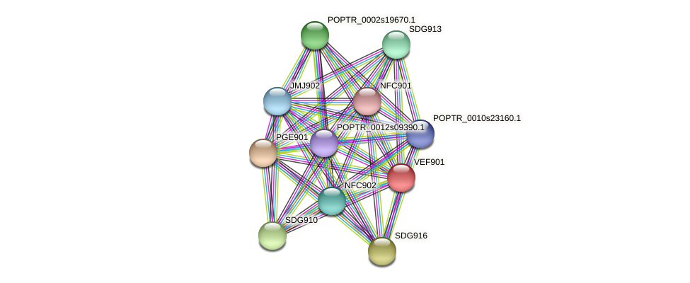 POPTR_0001s11740.1 protein (Populus trichocarpa) - STRING interaction network
