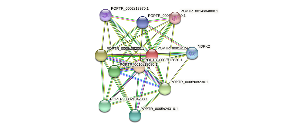 POPTR_0001s12470.1 protein (Populus trichocarpa) - STRING interaction network