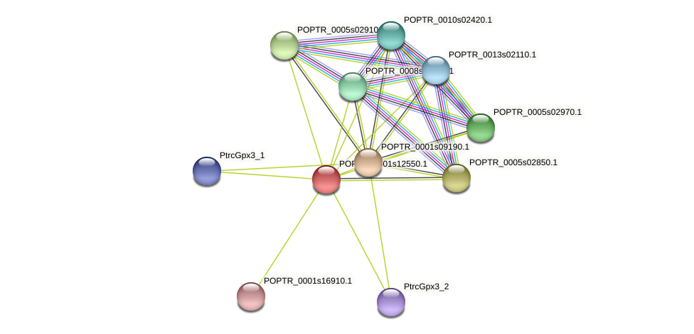 POPTR_0001s12550.1 protein (Populus trichocarpa) - STRING interaction network