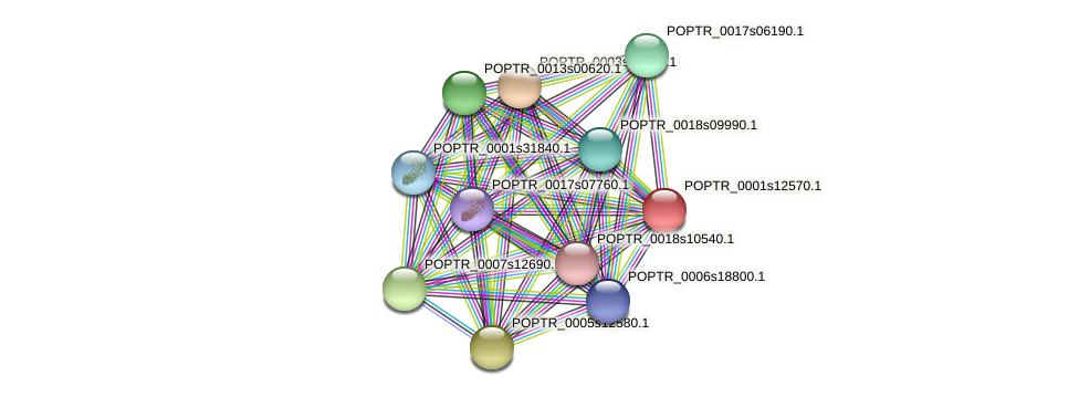 POPTR_0001s12570.1 protein (Populus trichocarpa) - STRING interaction network