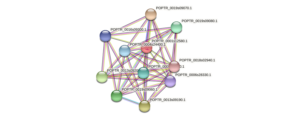 POPTR_0001s12580.1 protein (Populus trichocarpa) - STRING interaction network