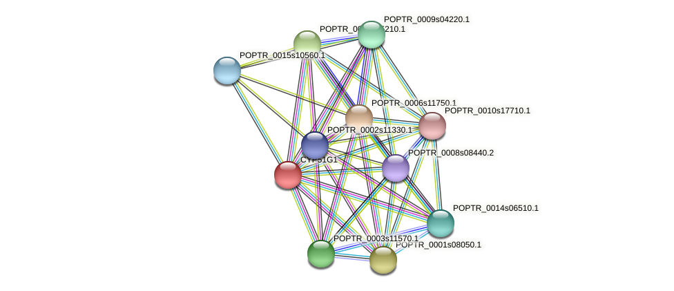 POPTR_0001s12910.1 protein (Populus trichocarpa) - STRING interaction network