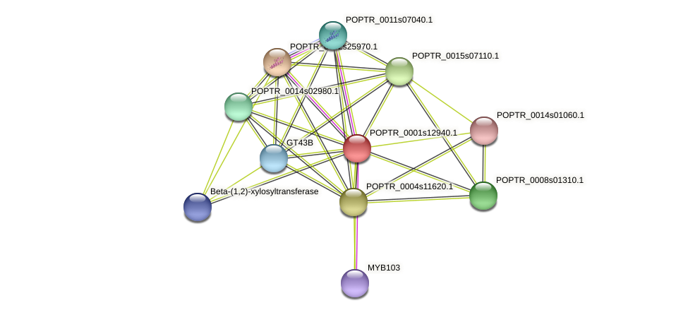 POPTR_0001s12940.1 protein (Populus trichocarpa) - STRING interaction network