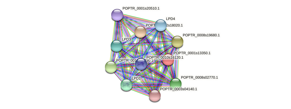 POPTR_0001s13350.1 protein (Populus trichocarpa) - STRING interaction network