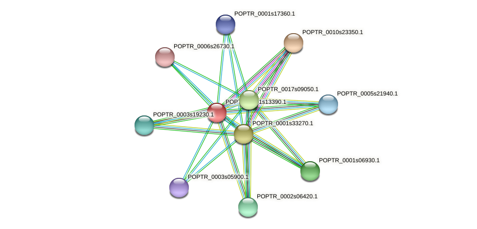 POPTR_0001s13390.1 protein (Populus trichocarpa) - STRING interaction network