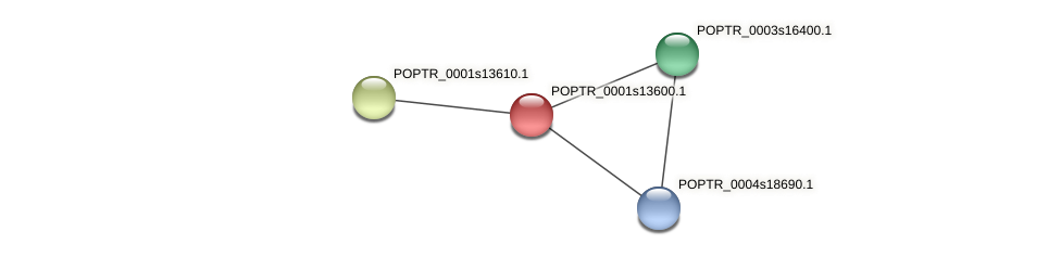 POPTR_0001s13600.1 protein (Populus trichocarpa) - STRING interaction network